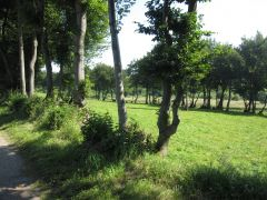 Eifel_Nationalpark 064