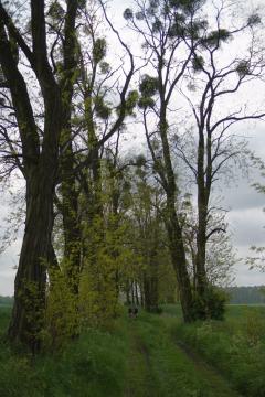 2010_05_23 - Chorin-M_ncheberg_019