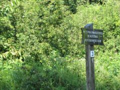 Eifel_Nationalpark 068