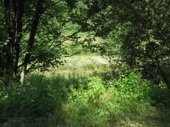 Eifel_Nationalpark 085