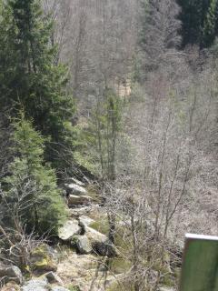 La Palma Feb_14_Harz 245
