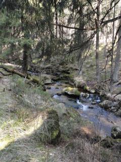 La Palma Feb_14_Harz 254