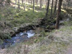 La Palma Feb_14_Harz 255
