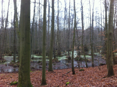 Oderberg-Eberswalde 1-13 015
