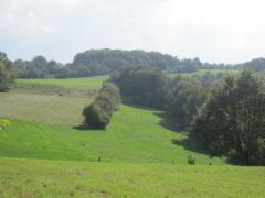 Pfalz2014 024