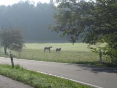 Pfalz2014 037