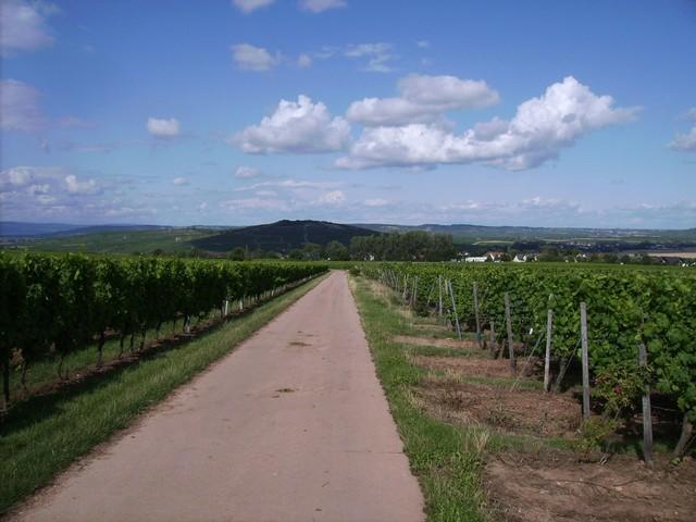 Rheinhessisches Weinland