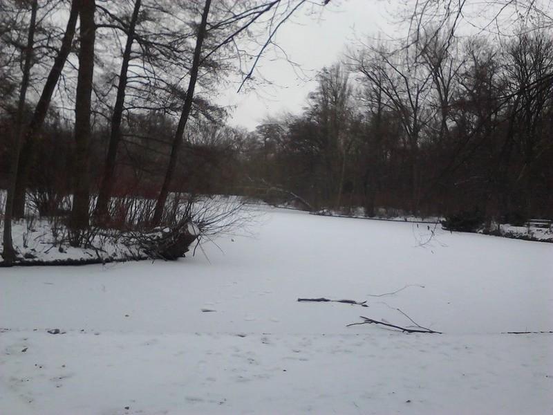 vereister Neuer See im Tiergarten