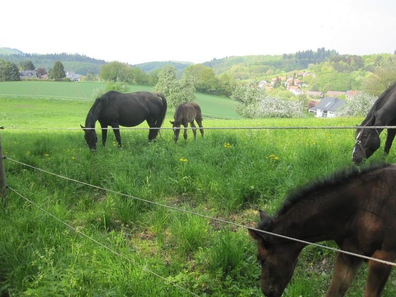 Ob jung, ob alt, das Pferdchen schmeckt auch kalt